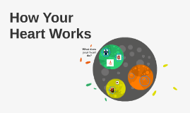 Copy of How Your Heart Works
