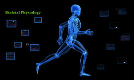 Physiology of the Skeletal System