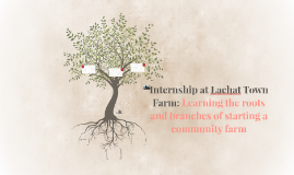 Internship at Lachat Town Farm: Learning the roots and branc