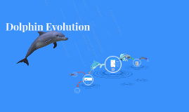 Dolphin Intelligence