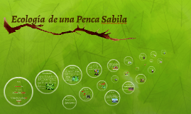 Grado 9-A Acosta Rua Melissa Maceta Ecologica de una Penca Sabila