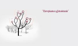 """""""Cloroplastos y fotosintesis"""""""