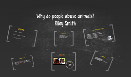 Why do people abuse animals?