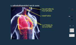 6.2 ademhalingsstelsel van de mens