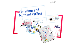Copy of Terrarium and Nutrient cycling