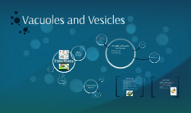 Vacuoles and Vesicles