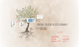 Copy of COMPARACIÓN ENTRE LA ESPECIE HUMANA Y LOS PÓNGIDOS