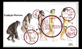 Copy of Evolução humana