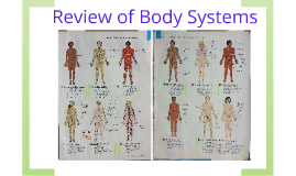 Ch 1 Review of Body Systems