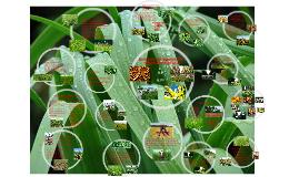 Copy of Especies Forrageiras em Sistemas Integrados