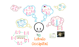 Copy of Copy of Lóbulo Occipital