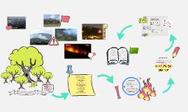 Reforestación de Suelos Incendiados con Microorganismos Rizo