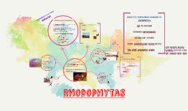 Copy of Rhodophytas