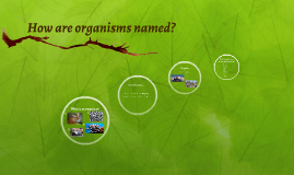 How are organisms named?