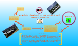 ENERGY TRANSFER WITHIN ECOSYSTEMSENERGY PIPELINE LAB