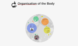 Organisation of the Body