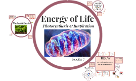 Focus 7: Cellular Energy