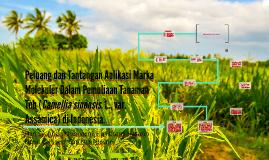 Peluang dan Tantangan Aplikasi Marka Molekuler Dalam Pemuliaan Tanaman Teh (Camellia sinensis. L., var. Assamica) di Indonesia.