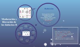 Maduración de linfocitos