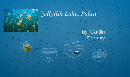 dna replication essay by caitlin cooney on prezi jellyfish lake