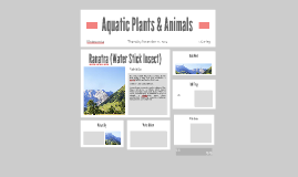 Aquatic Plants & Animals
