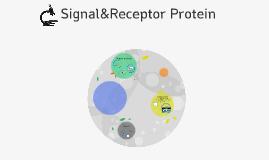 Signal protein