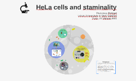 HeLa cells and staminality