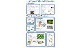 Copy of AP Bio- Cells 2:  Matter & Energy Processing.
