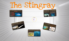 Copy of stingray