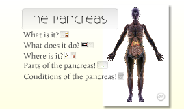 The Pancreas - less zoom