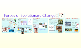Evolutionary Forces- Chapter 23