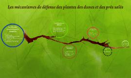 Les mécanismes de défense des plantes des dunes et des prés