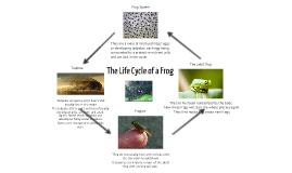 Web-based presentation