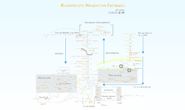 Biology Chemistry Metabolism pathway