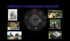 Copy of ESPECIES EN PELIGRO DE EXTINCIÓN