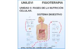 UNILEVI-Fisioterapia- Bioquímica Unidad II: Fases de la Nutrición Celular- Sistema Digestivo