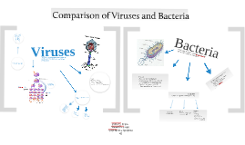Copy of Viruses and Bacteria
