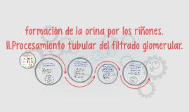 Copy of formación de la orina por los riñones.