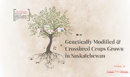 Bio 30: Genetically Modified Crops in Saskatchewan