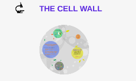 THE CELL WALL