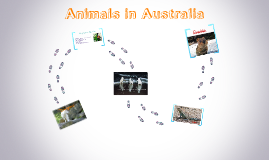 Animals in Australia