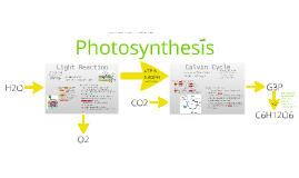 BI 2: Photosynthesis