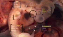 Copy of Copy of Desarrollo embrionario en humanos