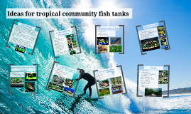 Ideas for tropical community fish tanks