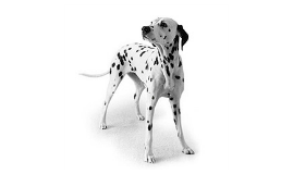 Visual Communication Dog