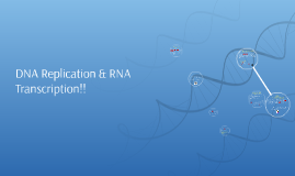 DNA Replication & RNA Transcription!!