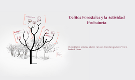 Delitos Forestales y Actividad Probatoria
