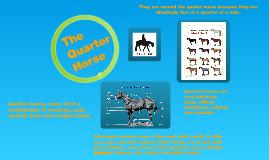 The Quater Horse !