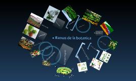 ramas de la botanica