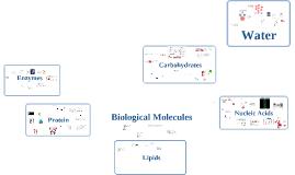 Copy of Biological Molecules
